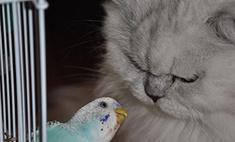 35 самых забавных котов Тольятти