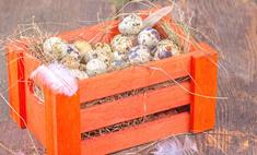 Перепелиное яйцо – ценнейший диетический продукт