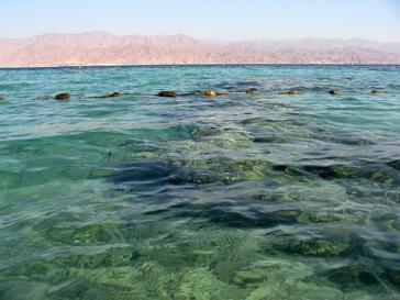 туризм, акула, опасность, Египет