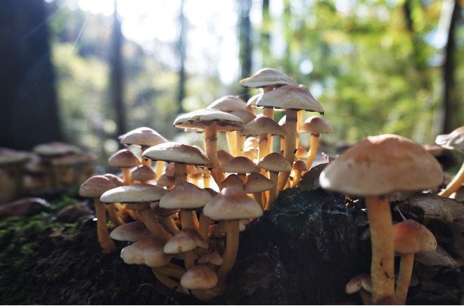 Первая помощь при отравлении грибами поможет спасти жизнь пострадавшего