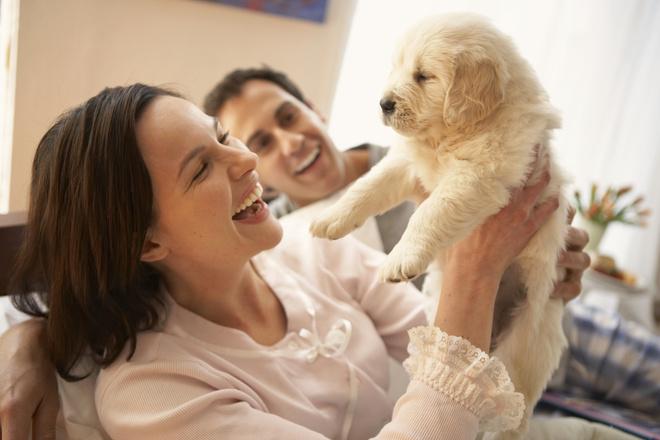как отучить щенка скулить по ночам