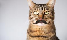 Как узнать, сколько коту лет: 4 разных способа
