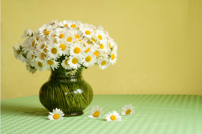 Азбука флористики