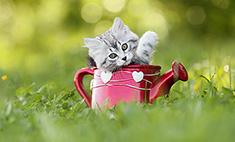 40 котов, которым все равно, что лето пошло на убыль