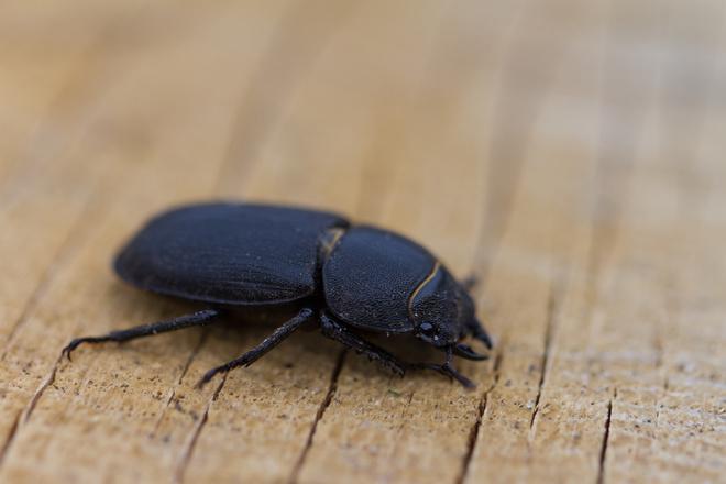 жуки в квартире