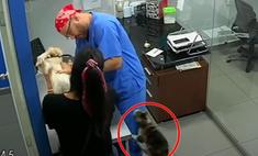 Кот-антипрививочник попытался спасти друга-пса, которому делали укол (видео)