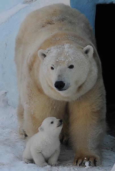белые медведи Кай и Герда