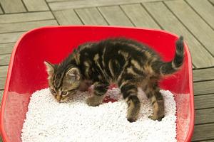 Что делать если кот гадит где попало