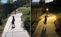 Собака приходит в восторг каждый раз, когда видит парк для прогулок (видео)