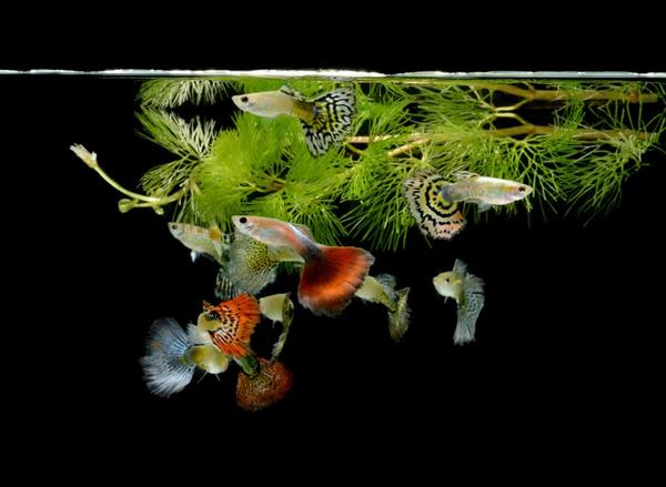 Содержание рыб