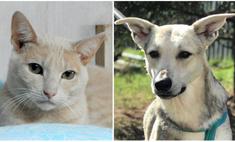 котопёс недели собака белла кот
