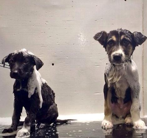 Первое купание олимпийских щенков