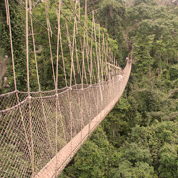 В ганском национальном парке Кукум проводники приведут вас к одной из главных достопримечательностей парка - веревочному мосту, подвешенному на высоте 40 метров над землей. Знайте, что он тут не единственный: попросите провести вас по «веревочному пути», состоящему из семи мостов общей протяженностью 330 метров.