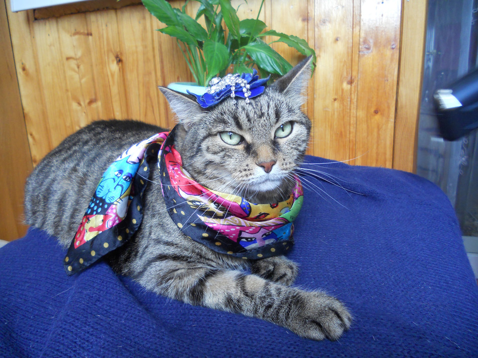 Фото конкурс для кошки