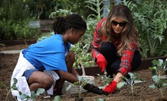 Леди с грядки: Мелания Трамп посадила капусту на огороде Обамы