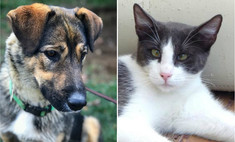 Котопёс недели: нежная собака Лана и раскосый кот Мичман