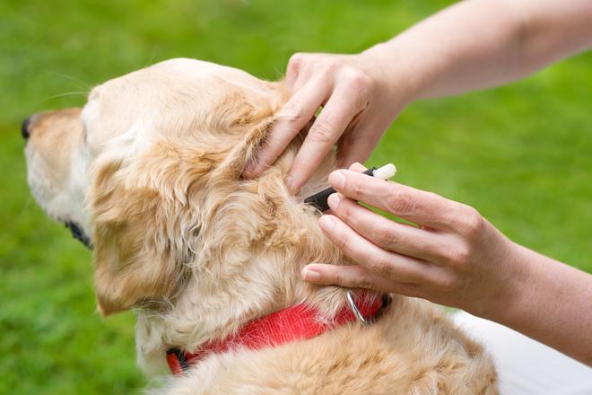 как удалить клеща с собаки