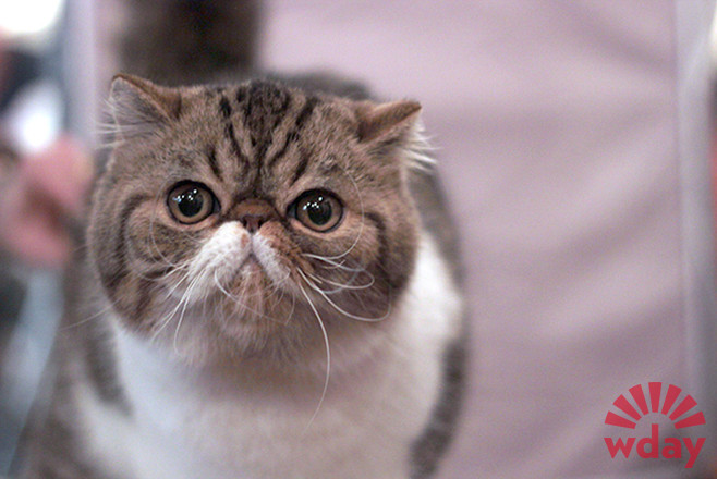 котики фото, породистые кошки