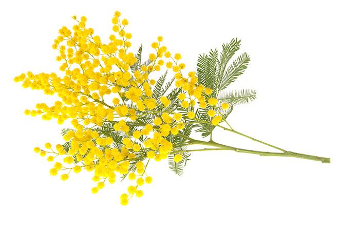 Что подарить на 8 Марта: красивые цветы