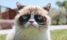 В Оренбурге появился свой «сердитый кот»