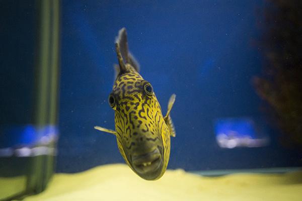 рыба, подвозный мир