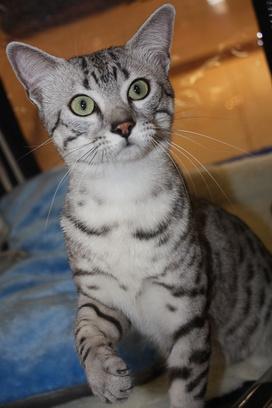 Казанские коты, выставка ICU