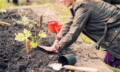 Инструкция: как восстановить плодородие почвы