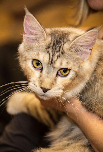 Породы кошек, домашние животные, кошки фото