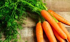Морковная ботва - продукт не менее ценный, чем корнеплод