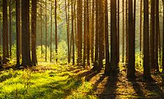 Самарец стал участником экстремального шоу «Выжить в лесу»