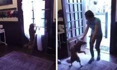 Собака, которую астронавтка подобрала на Байконуре, встречает ее после годовой разлуки (видео)