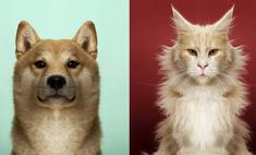 фотогалерея недели симметричные животные