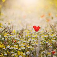 Насколько безгранична ваша любовь?