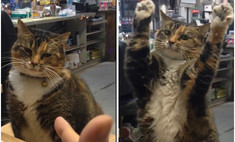 видео котом сдается вирусным