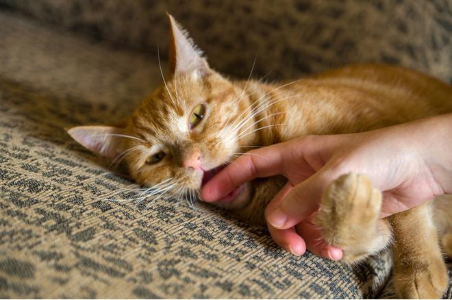 Кот бросается на руку