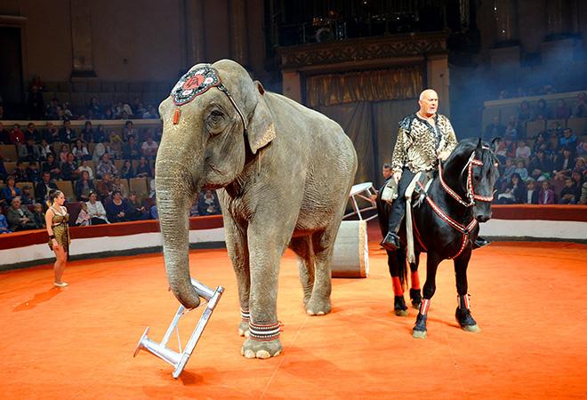 «Новогодние чудеса в цирке огромных зверей»