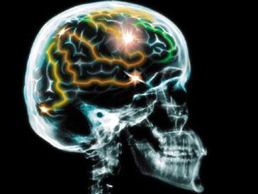 Миндалевидное тело в головном мозге влияет на социальную жизнь человека