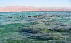 В Египте туристам предлагают бесплатный трансфер на безопасные пляжи