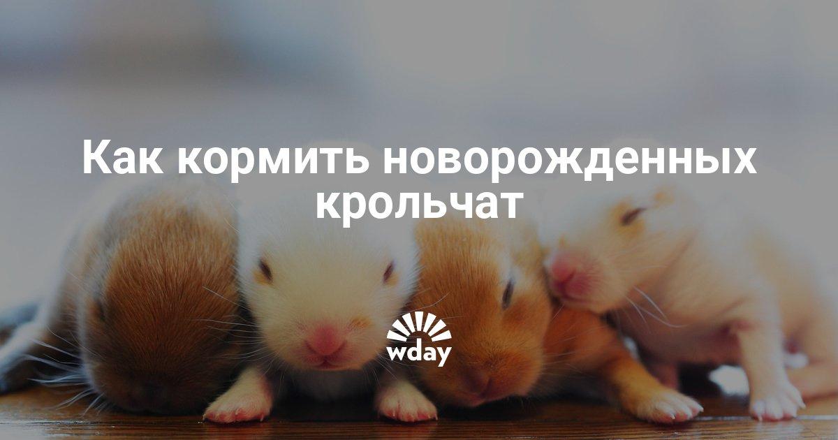 Как и чем выкормить новорожденных крольчат - Woman's Day