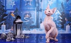 Майские котики: выбирай самого солнечного клубка Тулы!