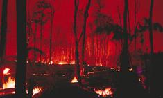 В Алтайский край лесной пожар пришел из Казахстана