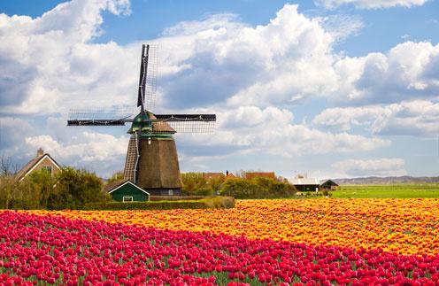 Парад цветов в Голландии - незабываемое зрелище