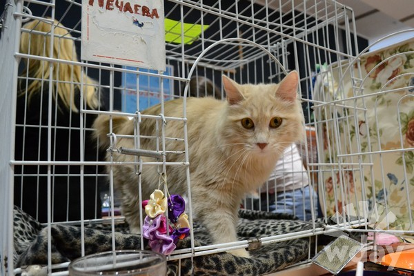 Волгоград ТРЦ Акварель международная выставка кошек Кэт-парад