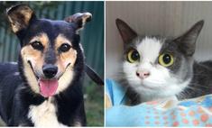 Котопёс недели: возьми из приюта собаку Мамушку или кошку Кристи