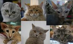 Топ-14 самых обаятельных кошек и котов Екатеринбурга