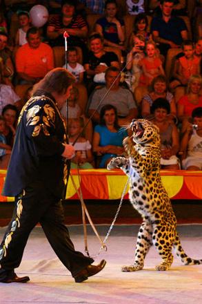 Фрагмент цирковой программы «След леопарда»