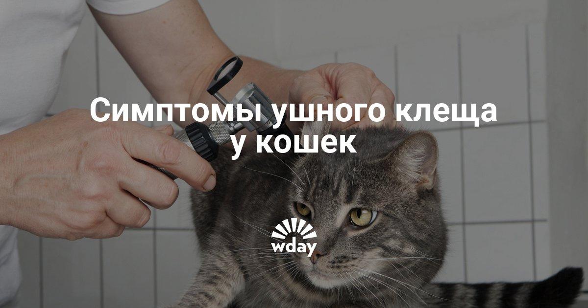 Отодектоз фото у кошек