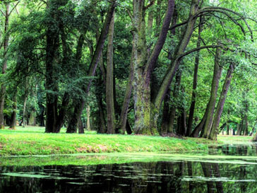 Вид на лесной берег