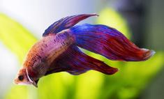 Аквариумные рыбки: выбираем питомцев из разных семейств