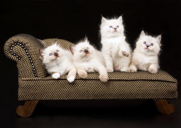 Вывести запах кошачьей мочи